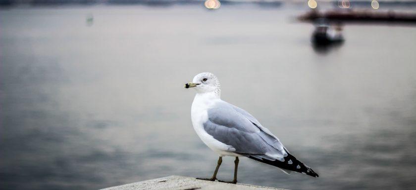 Tjusningen med fågelskådning